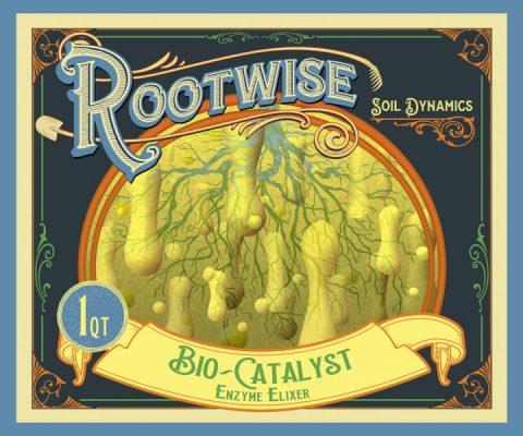 bio-catalyst (1)